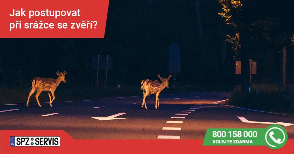 Co dělat, když potkáte na silnici zvěř?